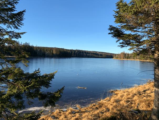 Oderteich Harz; Nadelholzwälder